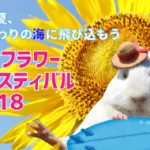 成田ゆめ牧場の夏のイベント2018・ひまわり迷路やキャンプ、アクセスや料金を紹介!